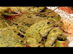 Tsing Yi square flower bird fish Market