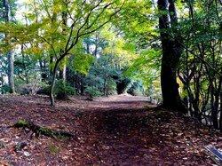Shuzenji Nature Park