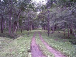 Gandhi Hill