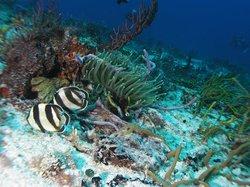 El Paso del Cedral Reef