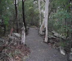 Toohey Forest