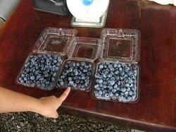Blue Berry Azumino