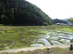 Hachigoro's Tojima Wetland