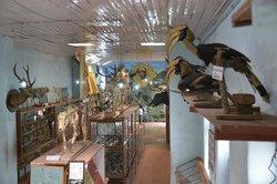 Shembaganur Museum of Natural History