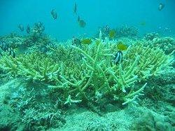 Lagundi Reef