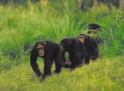 Wild Frontiers Uganda Safaris