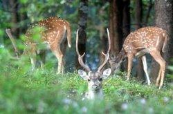 Sepahijala Wild Life Sanctuary