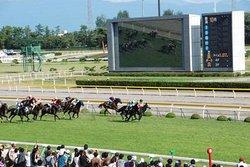 Niigata Horse Racetrack