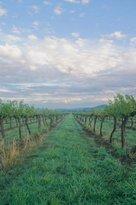 Thistle Hill Vineyard