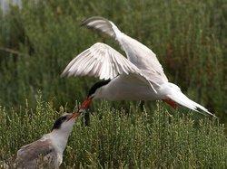 三亚河鸟类自然保护区