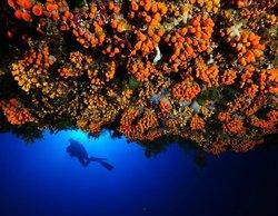 Mister Jump Diving Ustica