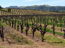 Sonoma - Cutrer Vineyards Inc