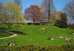 Thomson Memorial Park