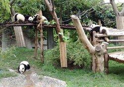 Ji'nan Wildlife Park