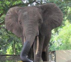 Zoo Nationale d'Abidjan