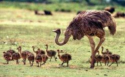 Cashoo Ostrich Park