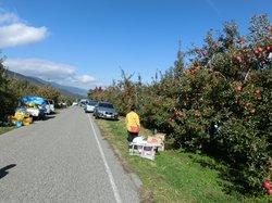 Azumino Tourlist Orchard