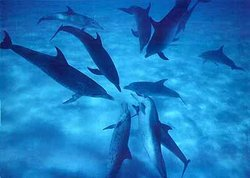 Wild Dolphin Excursion