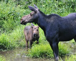 Gorham Moose Tours