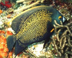 Victory Reef