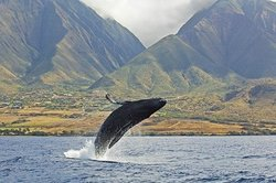 Season Whale Watches with Ambassadors of the Environment