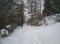 Parco Naturale del Gran Bosco di Salbertrand