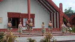 Corporate Tours Tauranga Day Tours