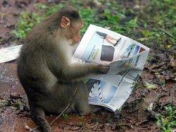 Naughty Monkey Day Tours