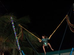 Toucan Jumper Bungee Trampoline