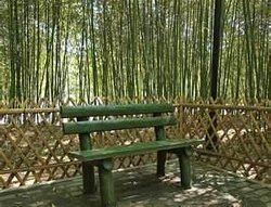 Bamboo Garden one plus one Mall