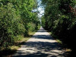 The Friendship Trail