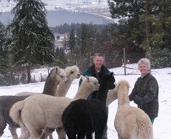 Oyama Lake Alpaca Farm