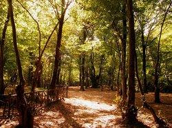 Alangdarreh Jungle