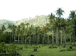 Tulwanan Village