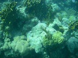 Guanahani Divers