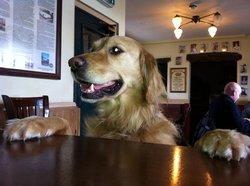 a very dog friendly pub