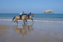 Seacliff Stables