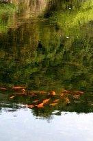 Deyu Ecological Park