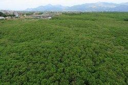Mangrove Reserve of Zhangzhou
