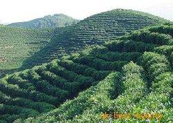 Xianxia Mountain