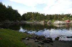 Grønevika v/ Arboretet