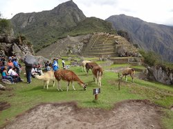Jat Peru Adventures