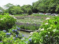 Utatsuyama Iris Garden