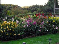 Melba Gully Cottage Flower Farm