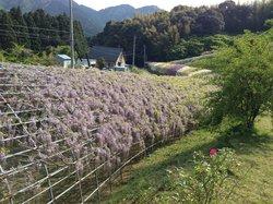 Сад цветов Кавати Фудзи вгороде Китакюсю