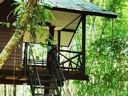 Khao Sok Tree House Restaurant