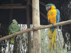 Amaru Zoologica