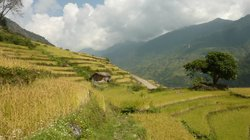 Alpine Asian Treks and Expeditions - Private Day Tours