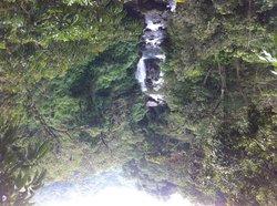 Cloudbridge Nature Reserve
