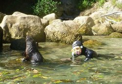 Abel Tasman Seal Swim